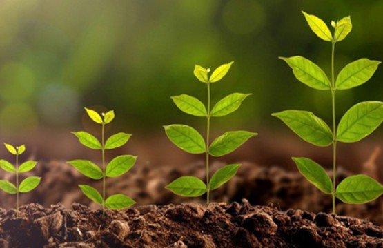 LinkedIn, startups et botanique